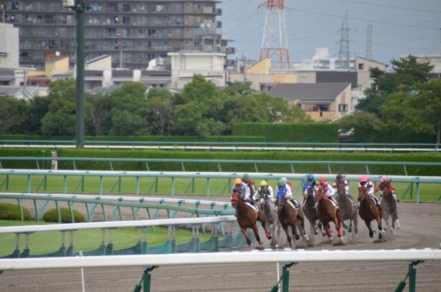 レース 場 東京 競馬